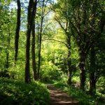Die Sonne scheint durch das Blätterdach des Waldes auf den Bergischen Wanderweg
